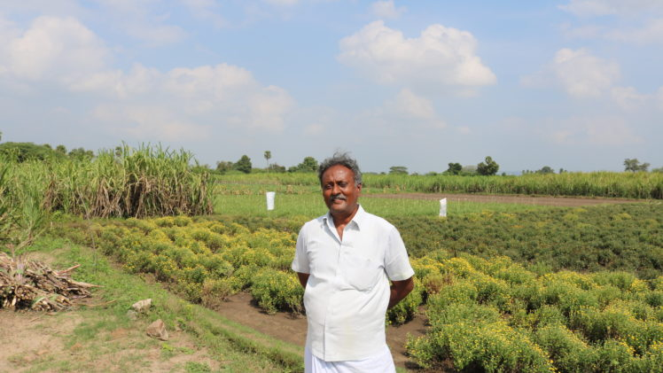 Pratap Reddy and the Impact of Drip Irrigation